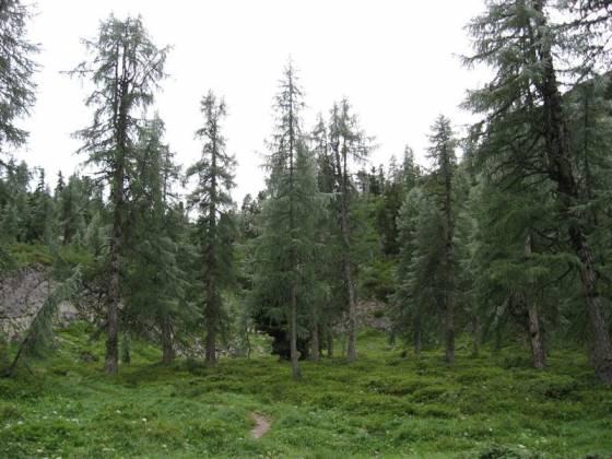 Horský les